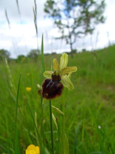 Journée Nature à Lamaguère